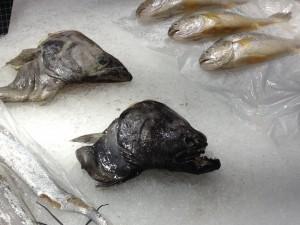 カルフールで売ってる変な魚。。